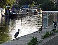 The Thames at Kingston upon Thames. Heron and Canada Geese. - panoramio.jpg