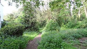 The Wood, Surbiton - The Wood