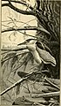 The aquatic birds of Great Britain and Ireland (1906) (14775399783).jpg