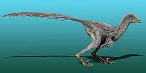 alt=Description de l'image Tianyuraptor NT.jpg.