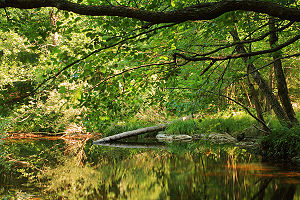 Strandzha Nature Park - A forest in Tisovitsa Reserve