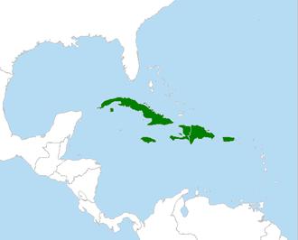 Tody - Image: Todis Caribbean