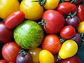 Tomatenvielfalt.jpg
