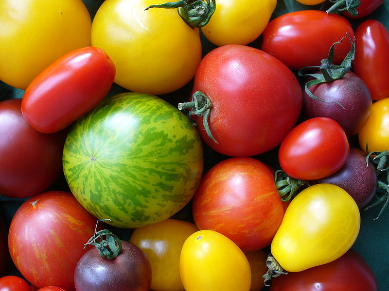 File:Tomatenvielfalt.jpg