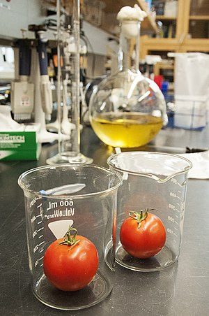 Tomato - Research on tomatoes