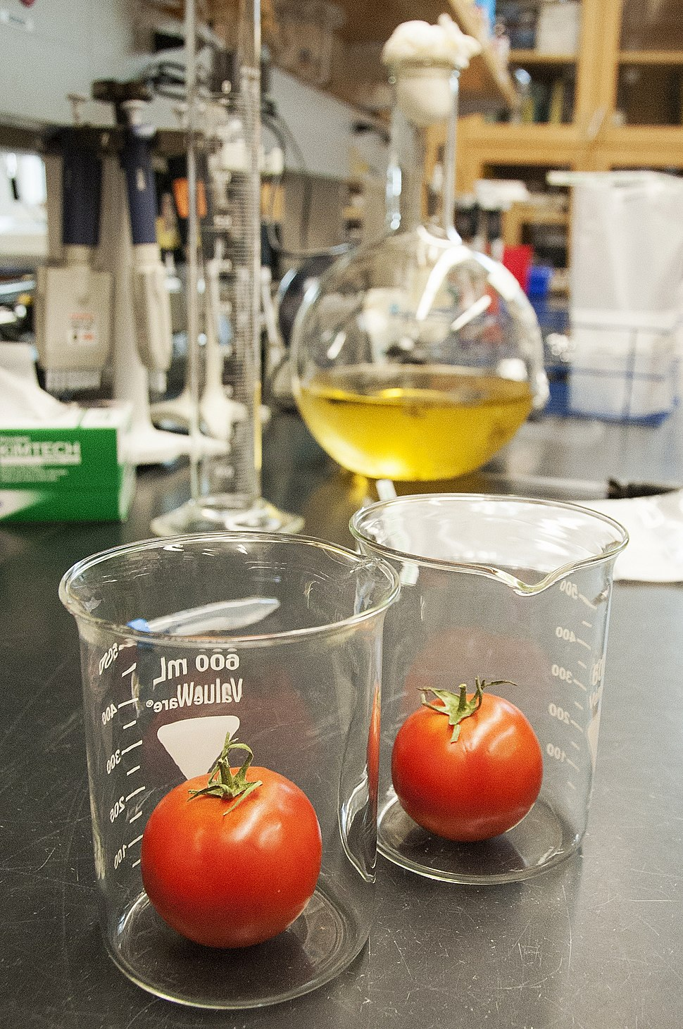 Tomato laboratory research