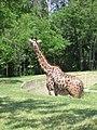 Toronto Zoo IMG 1127 (194432236).jpg