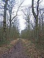 Track in Ash Wood - geograph.org.uk - 718929.jpg
