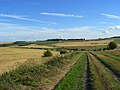 Track on the downs between Lambourn and Ashbury - geograph.org.uk - 918570.jpg
