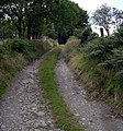 Track to Llainlas - geograph.org.uk - 1432012.jpg