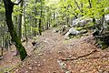 Trail in forest Slovenia 5.jpg