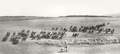 Transvaal Mounted Rifles 1906.png