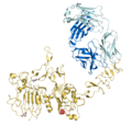 Trastuzumab Fab-HER2 complex 1N8Z.png