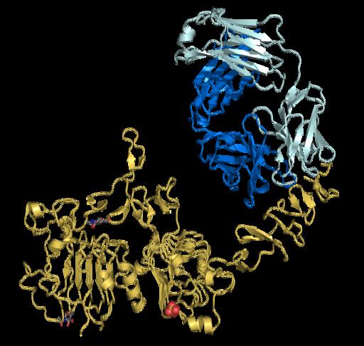 Trastuzumab Fab-HER2 complex 1N8Z