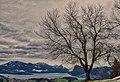 Tree With Lake Lucerne And Rigi (243571351).jpeg