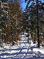 Trees - panoramio (52).jpg