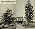 Trees for Long Island (1902) (20537813056).jpg