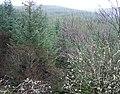 Treetops - geograph.org.uk - 312699.jpg