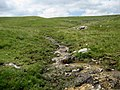 Tributary of Cote Gill - geograph.org.uk - 1377647.jpg