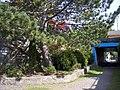 Tunnel to Sunken Gardens in Prince Rupert, British Columbia.jpg