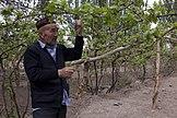 Turpan Loulan Wine Industry Co vineyards.jpg