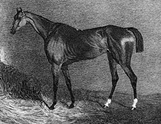 Pope Joan (horse) - Pope Joan's daughter Turquoise