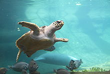 Image Result For Columbus Zoo And