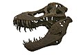 Tyrannosaurus-IMG 4177.jpg