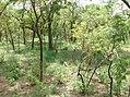 UNESCO Niokolo-Koba National Park Senegal (3686553199).jpg