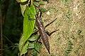 Unidentified insect karkar.jpg
