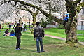 University of Washington Quad cherry blossoms 2014 - 13 (13348194824).jpg