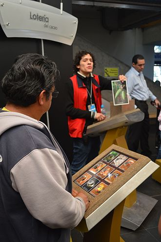 Lotería - Lotería game based on cacao being played at the Universum museum in Mexico City