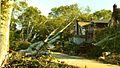 Utopia Pkwy after the tornado in 2010.jpg
