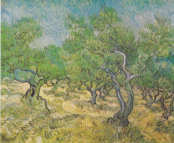 オリーブ畑 (Wikipediaの画像)