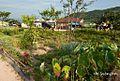 Vergetable Garden (텃밭) - panoramio.jpg