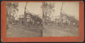 View of downed trees, by William Allderige & Son.png