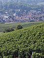 Vigne Pinot noir (Vue sur Cumières) Cl.J.Weber01 (23595233751).jpg