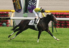 Vodka(horse) 20070527R1.jpg