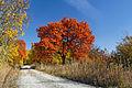 Wöllmisse im Herbst.jpg