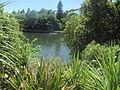 Waikato River, Hamilton 29 November 2015 02.JPG