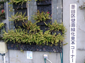 Wall gardening-1.png