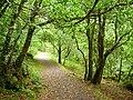 Waterfall Path, Glengarriff Forest - geograph.org.uk - 262618.jpg