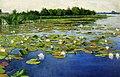 Weyssenhoff Water lilies.jpg