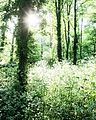 White Woods in Spring - panoramio.jpg