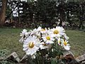 White in the Garden.jpg