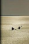 Winter kayaking (6516854839).jpg