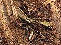 Wolf Spider (48377534937).jpg