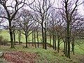 Woodland, Foxfield - geograph.org.uk - 348515.jpg