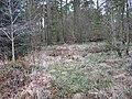 Woodland, Hillhead - geograph.org.uk - 339280.jpg