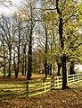 Woodland near Welton-le-Wold - geograph.org.uk - 612965.jpg